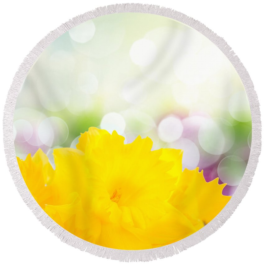 Easter Round Beach Towel featuring the photograph Daffodil Flowers by Anastasy Yarmolovich