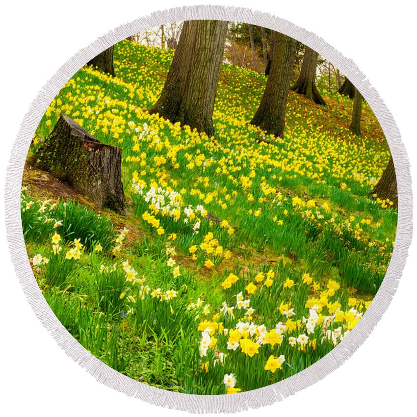 Cleveland Round Beach Towel featuring the photograph Daffodil Hill by Kenneth Sponsler