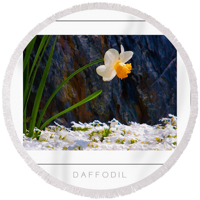 Daffodil Round Beach Towel featuring the photograph Daffodil Poster by Mike Nellums