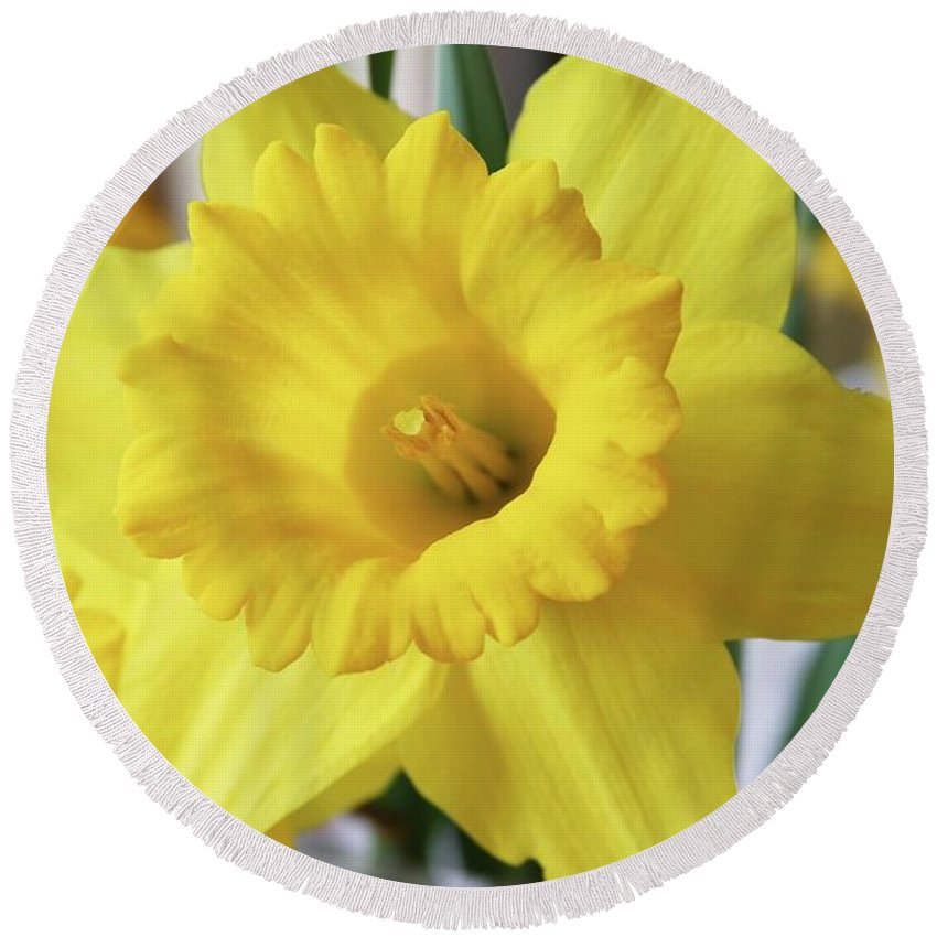 Daffodil Round Beach Towel featuring the photograph Daffodil by Rebecca Renfro