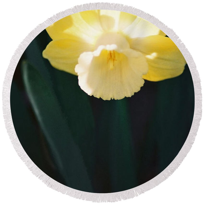 Daffodil Round Beach Towel featuring the photograph Daffodil by Steve Karol