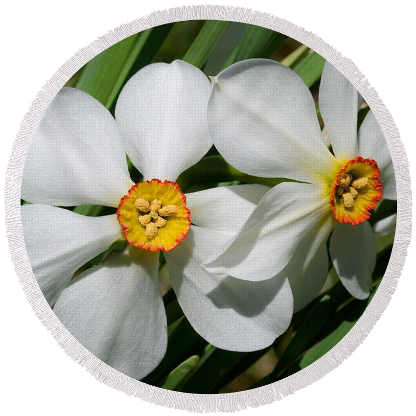 Daffodil Round Beach Towel featuring the photograph Daffodils by David Freuthal