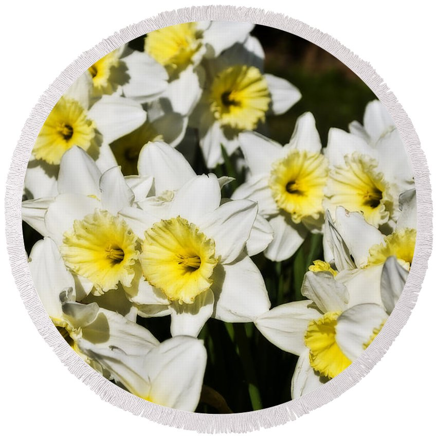 Flowers Round Beach Towel featuring the photograph Daffodils by Svetlana Sewell
