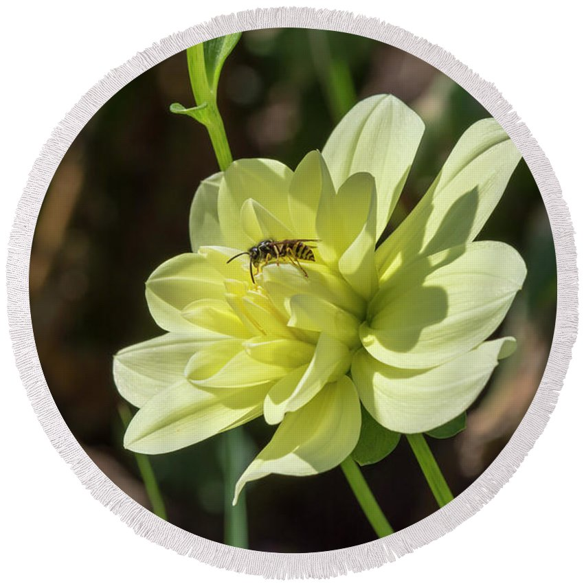 Flower Round Beach Towel featuring the photograph Dahlia With Wasp by Bruce Frye