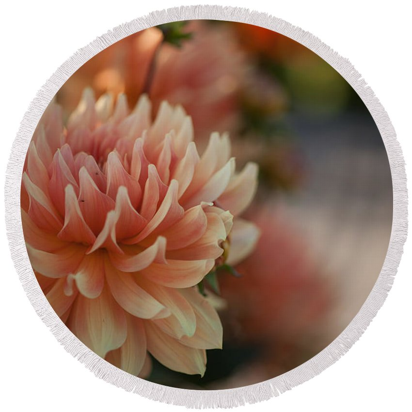Flower Round Beach Towel featuring the photograph Dahlias Season by Mike Reid