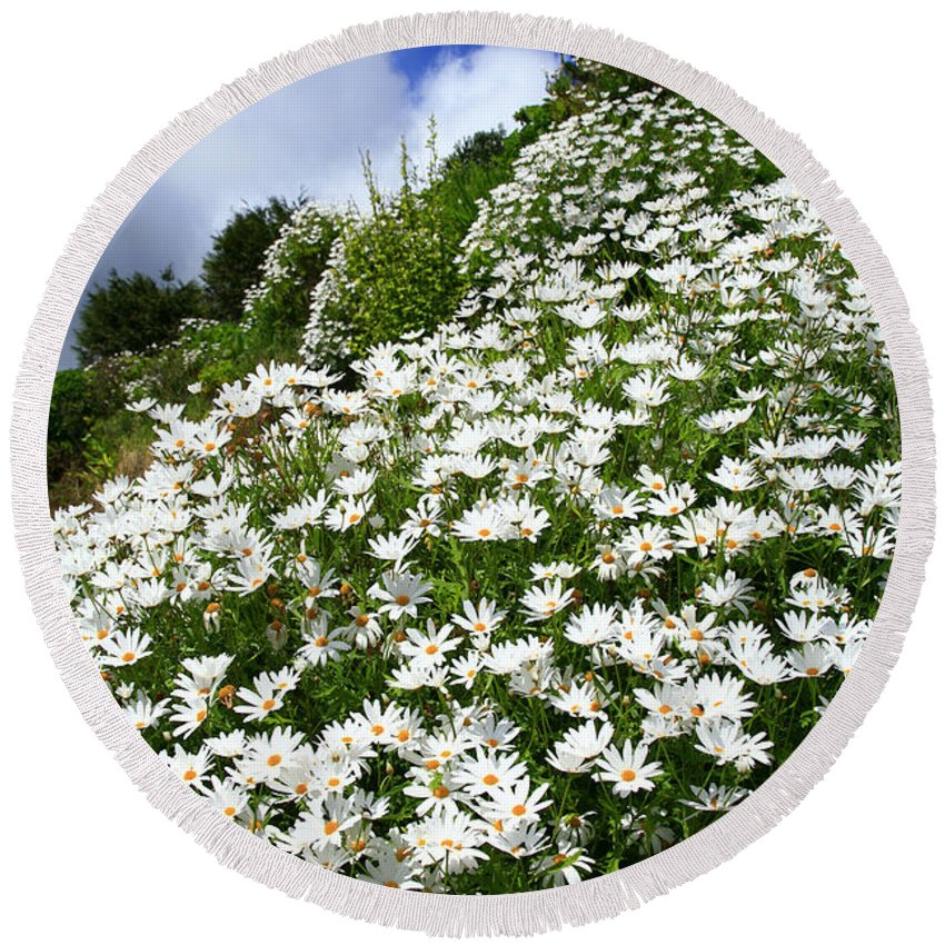 Countryside Round Beach Towel featuring the photograph Daisies by Gaspar Avila
