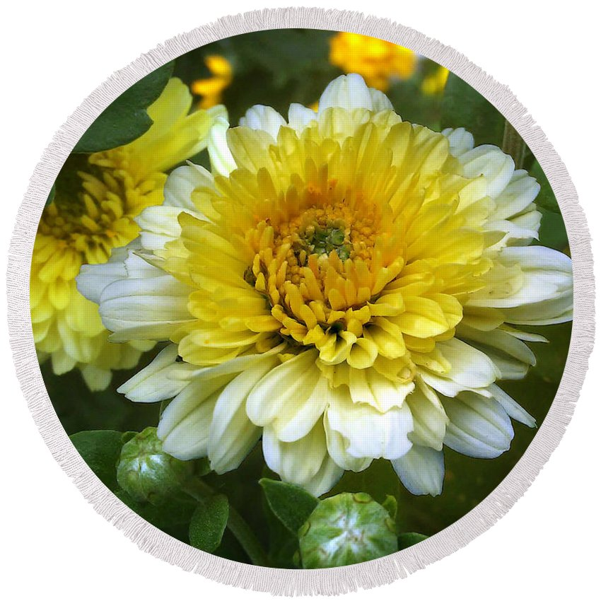Flowers Round Beach Towel featuring the photograph Daisies by Jasna Dragun
