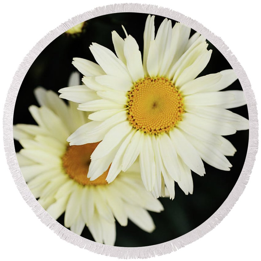 Flowers Round Beach Towel featuring the photograph Daisies by Sue Collura