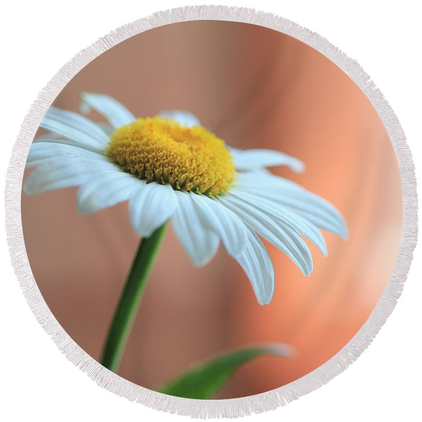 Daisy Round Beach Towel featuring the photograph Daisy by Angela Murdock