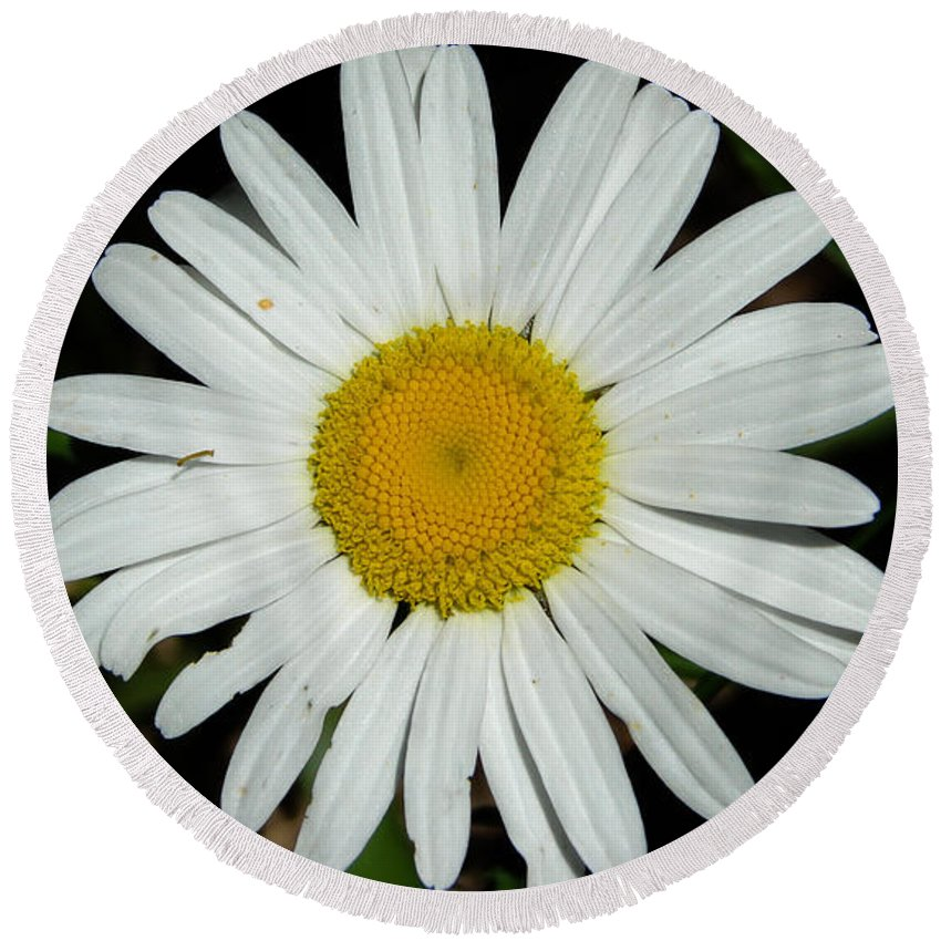 White Round Beach Towel featuring the photograph Daisy by Carl Moore