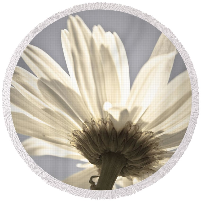 Flower Round Beach Towel featuring the photograph Daisy by Danielle Silveira