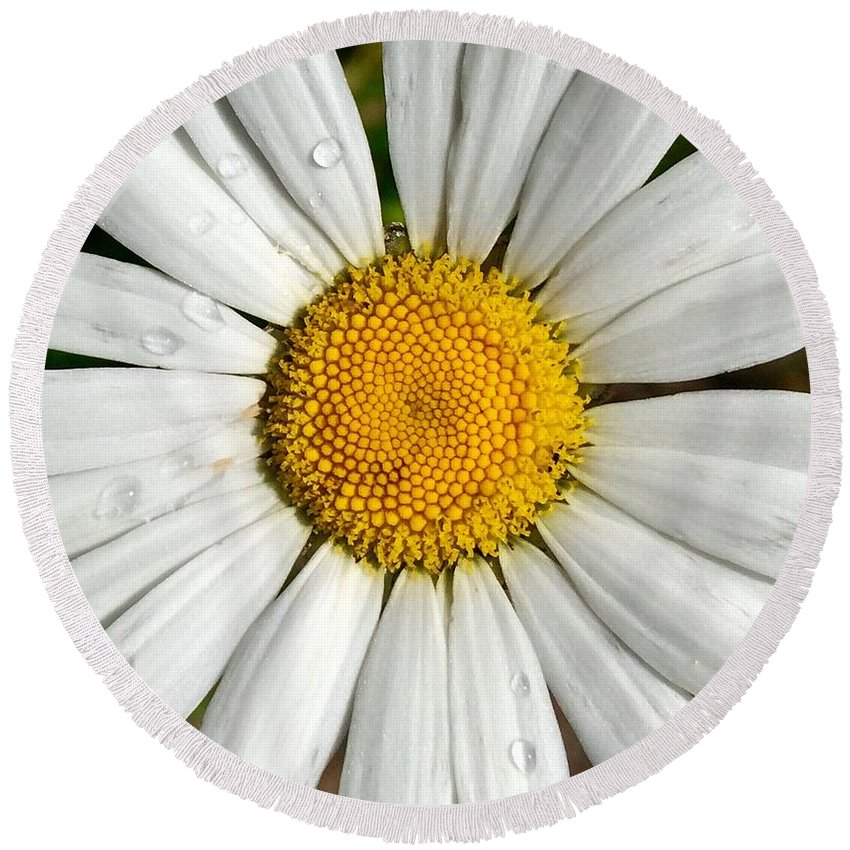 Flower Round Beach Towel featuring the painting Daisy Dew by Jennifer Lake
