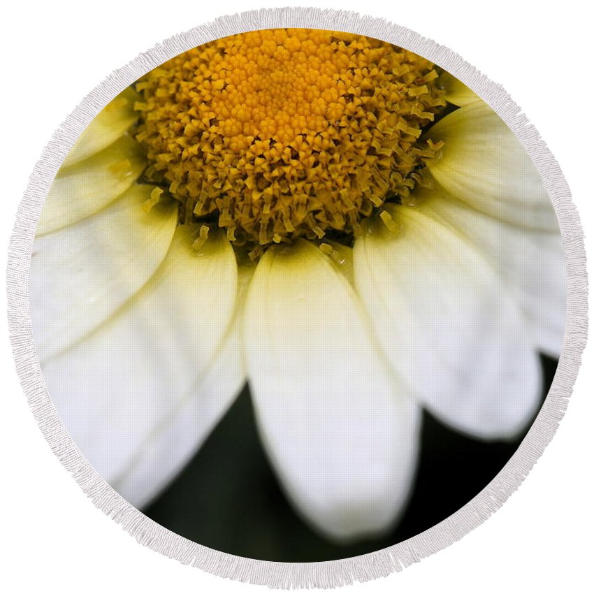 Flower Round Beach Towel featuring the photograph Daisy Smile by Angela Rath