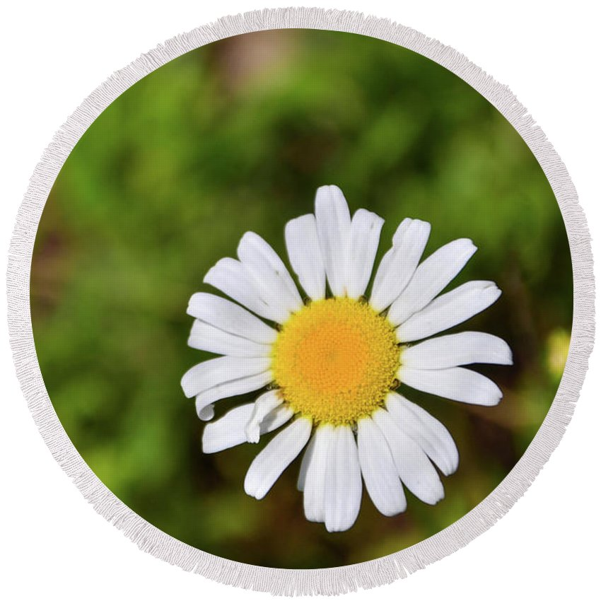 Plants Round Beach Towel featuring the photograph Daisy by Soni Macy