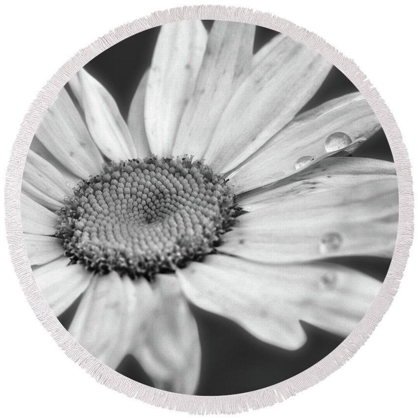Daisy Round Beach Towel featuring the photograph Daisy With Raindrops In Black And White by Smilin Eyes Treasures