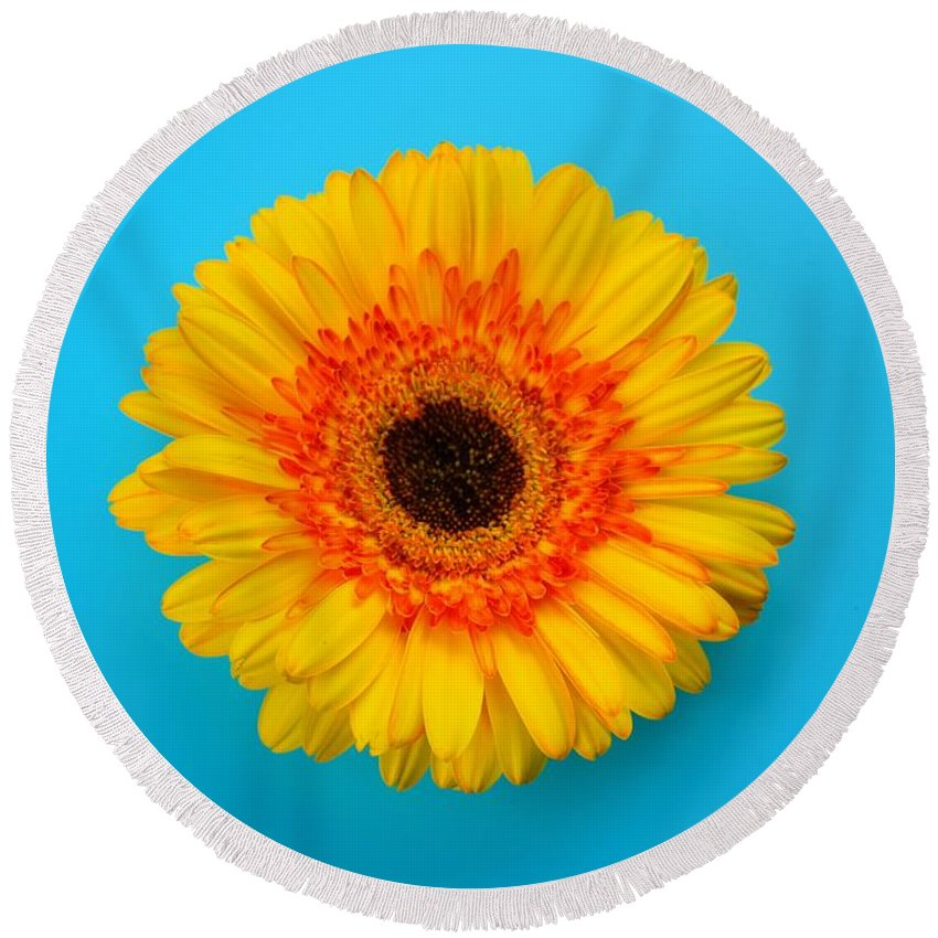 Daisy Round Beach Towel featuring the photograph Daisy - Yellow - Orange On Light Blue by Ray Shrewsberry