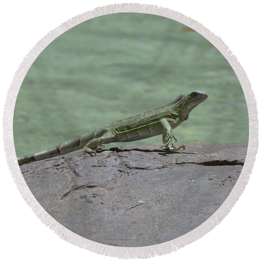 Iguana Round Beach Towel featuring the photograph Dancing Iguana On Rocks Along The Water's Edge by DejaVu Designs