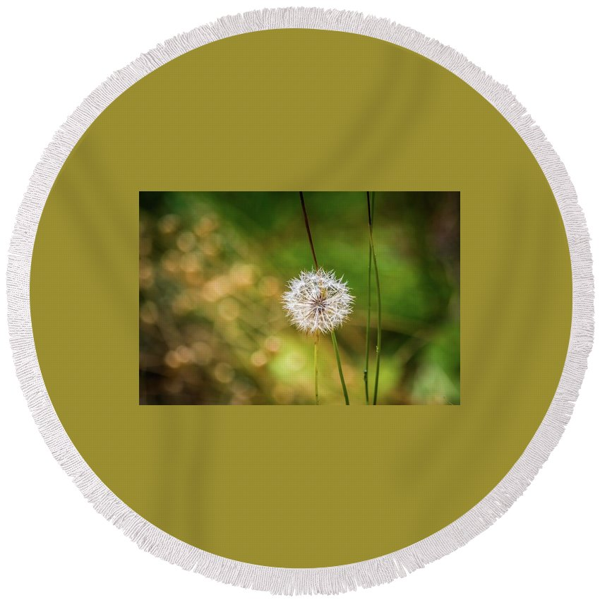 Dandelion Round Beach Towel featuring the photograph Dandelion by Eric Strickland