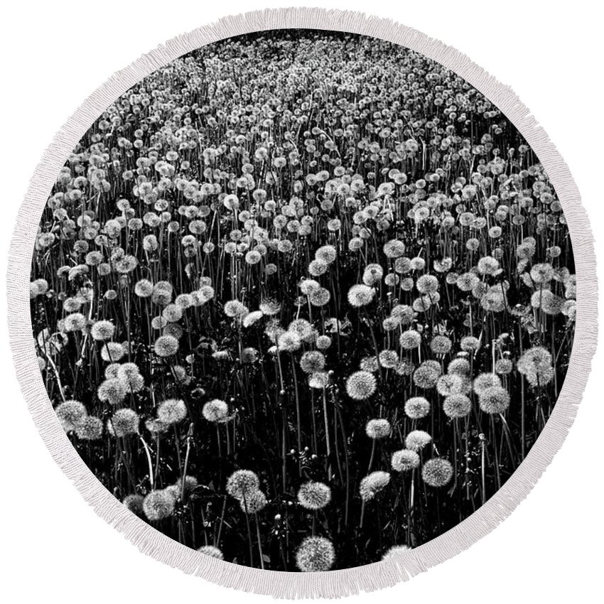 Dandelion Round Beach Towel featuring the photograph Dandelion Field In Black And White by Olga Akulinina