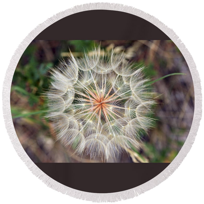 Dandelion Round Beach Towel featuring the photograph Dandelion Fuzz by Marilyn Hunt