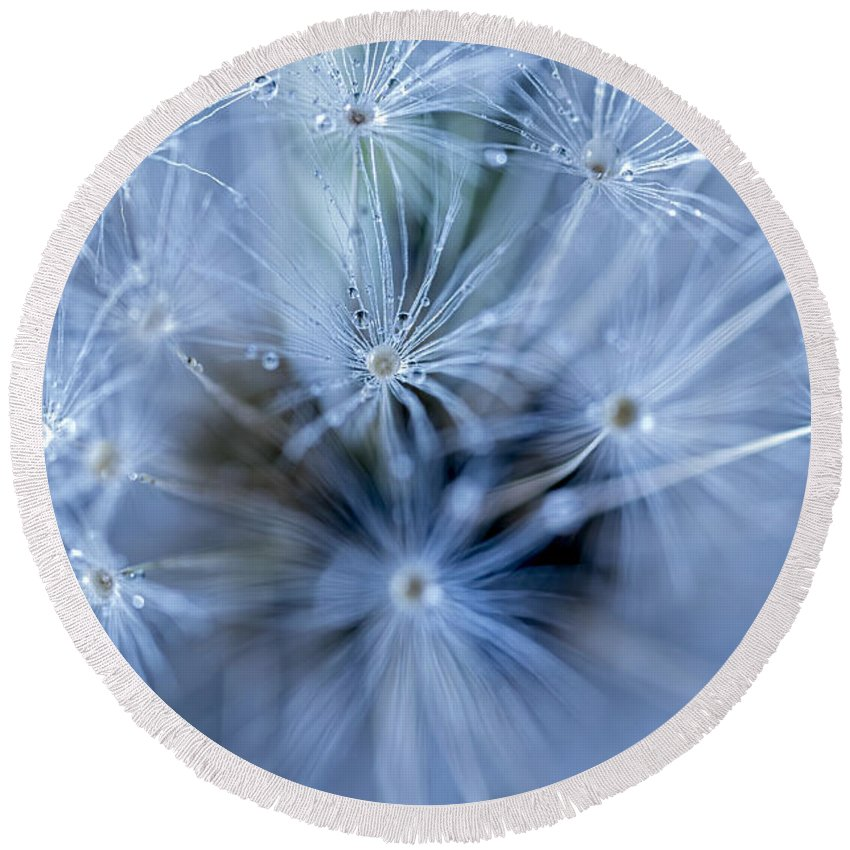 Background Round Beach Towel featuring the photograph Dandelion Macro by Paulo Goncalves