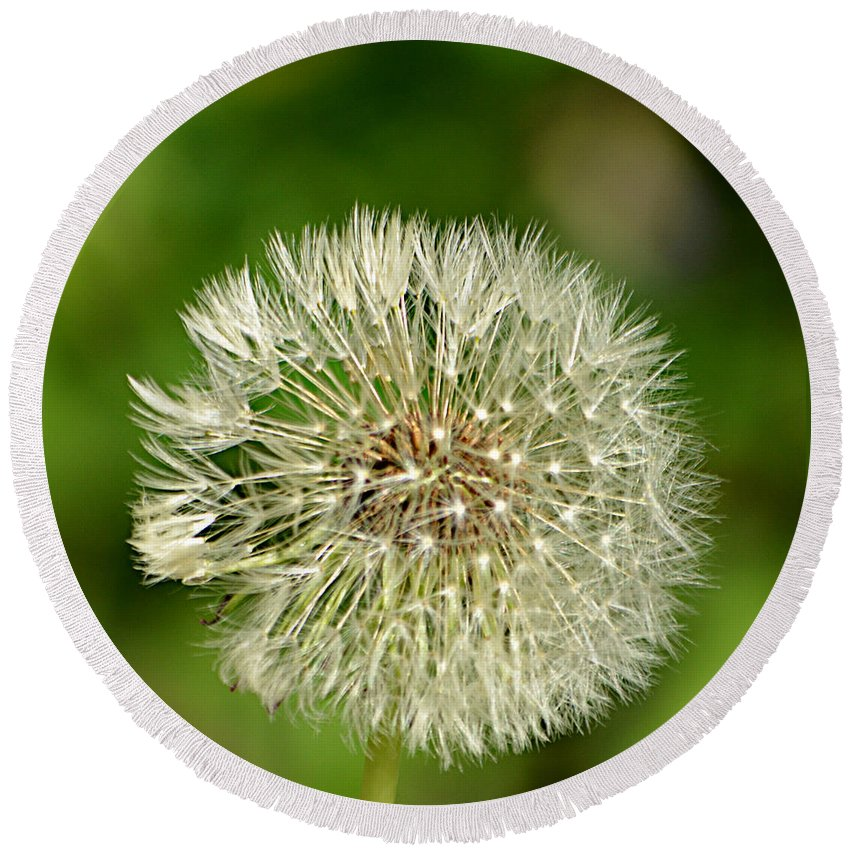 Dandelion Puff Round Beach Towel featuring the photograph Dandelion Puff by Ally White