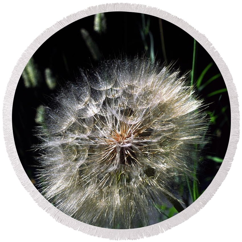 Seedball Of Common Dandelion Round Beach Towel featuring the photograph Dandelion Seedball by Sally Weigand