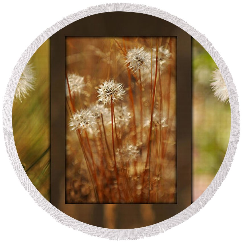 Dandelions Round Beach Towel featuring the photograph Dandelion Series by Jill Reger