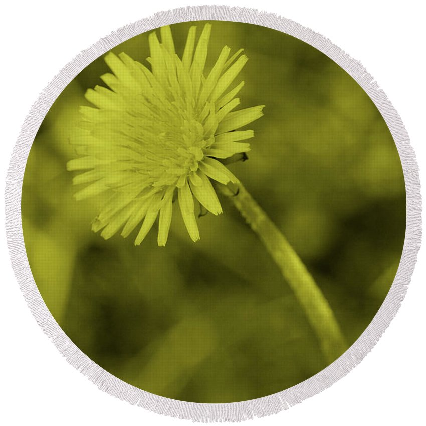 Tint Round Beach Towel featuring the photograph Dandelion Tint by Eddie Barron
