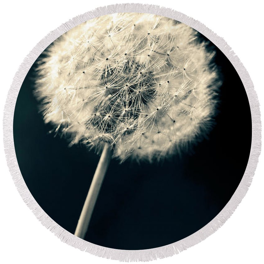 Closeup Round Beach Towel featuring the photograph Dandelion by U Schade