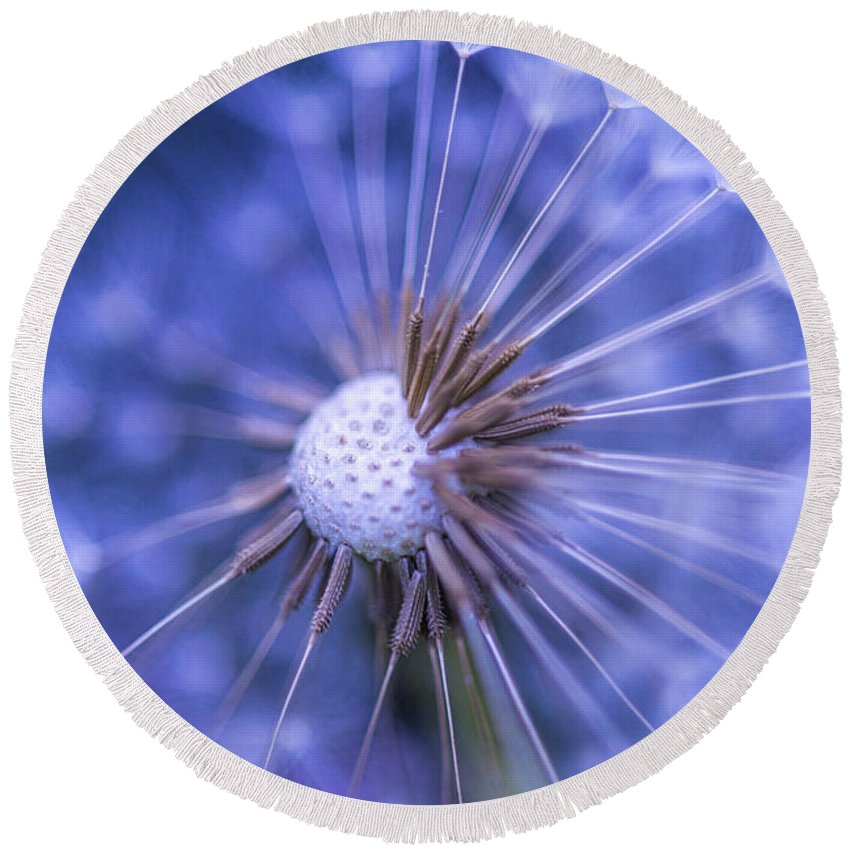 Dandelion Round Beach Towel featuring the photograph Dandelion Wish by Alana Ranney