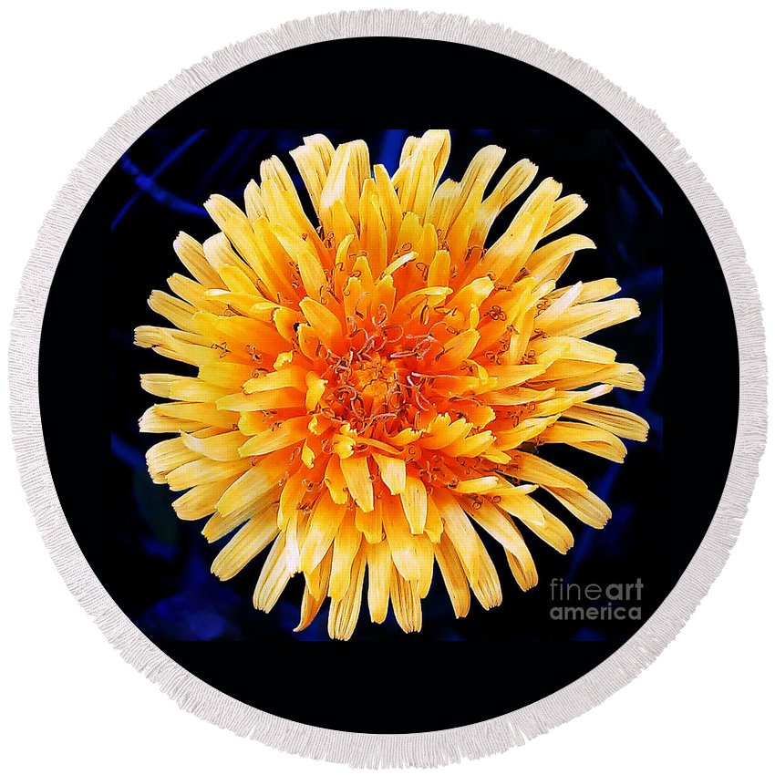 Flower Round Beach Towel featuring the photograph Dandelion Yellow by Jasna Dragun