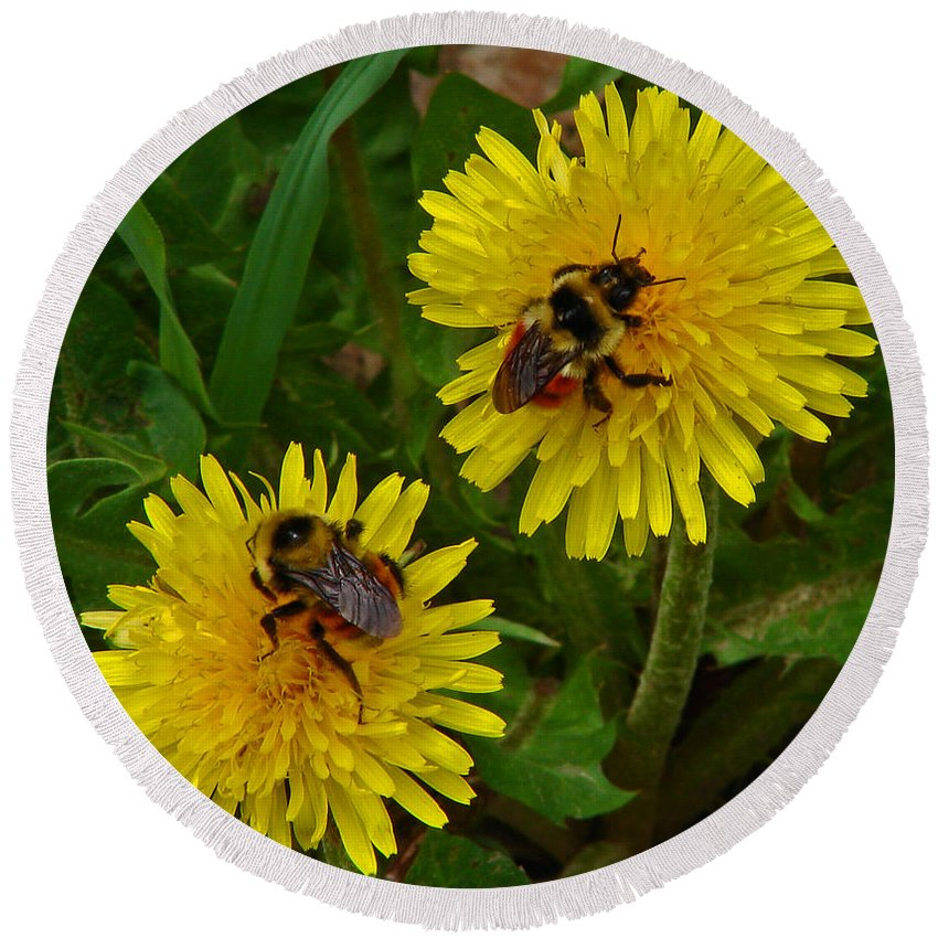 Dandelion Round Beach Towel featuring the photograph Dandelions And Bees by Heather Coen