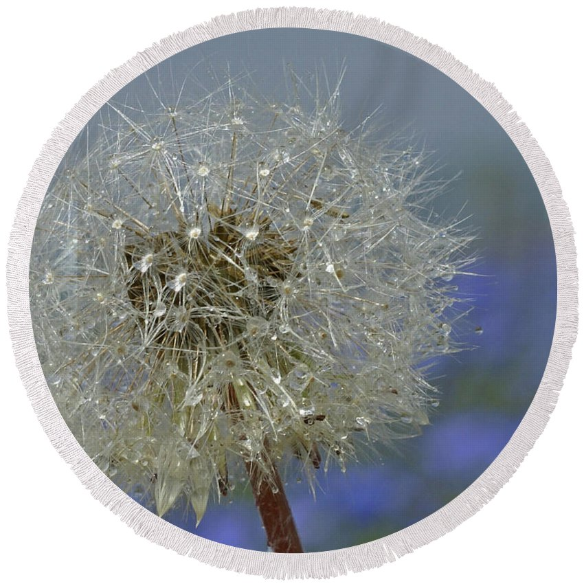 Dandelion Round Beach Towel featuring the photograph Dandy Lion by Heather Coen