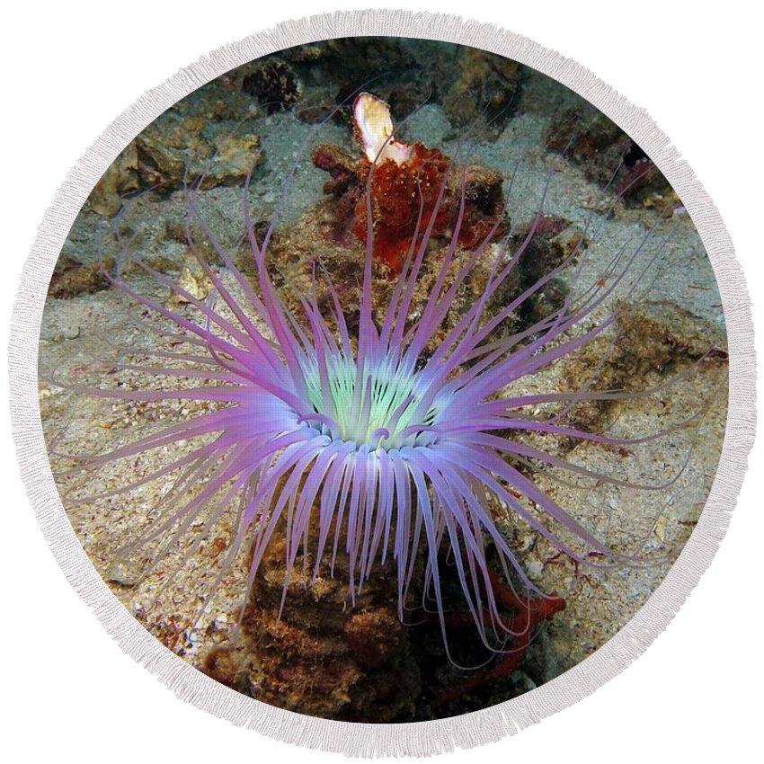 Dangerous Round Beach Towel featuring the photograph Dangerous Underwater Flower by Sergey Lukashin