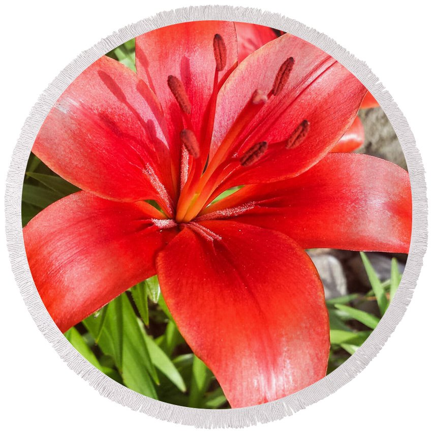 Dark Round Beach Towel featuring the photograph Dark Orange Red Lily by Jennifer Kohler