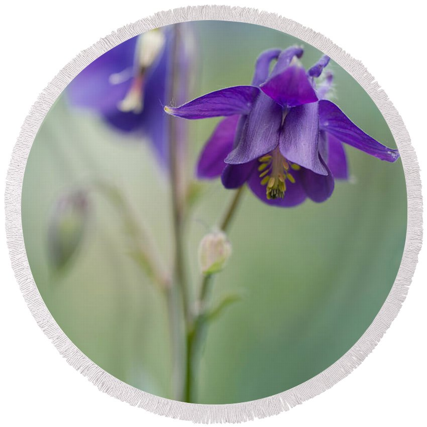 Flower Round Beach Towel featuring the photograph Dark Violet Columbine Flowers by Jaroslaw Blaminsky
