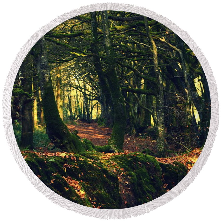 Trees Round Beach Towel featuring the photograph Dark Woods by Andy Thompson