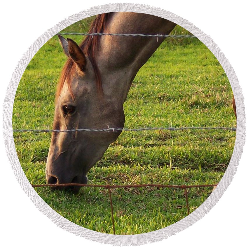 Horse Round Beach Towel featuring the photograph Daydreaming by Brandy Woods