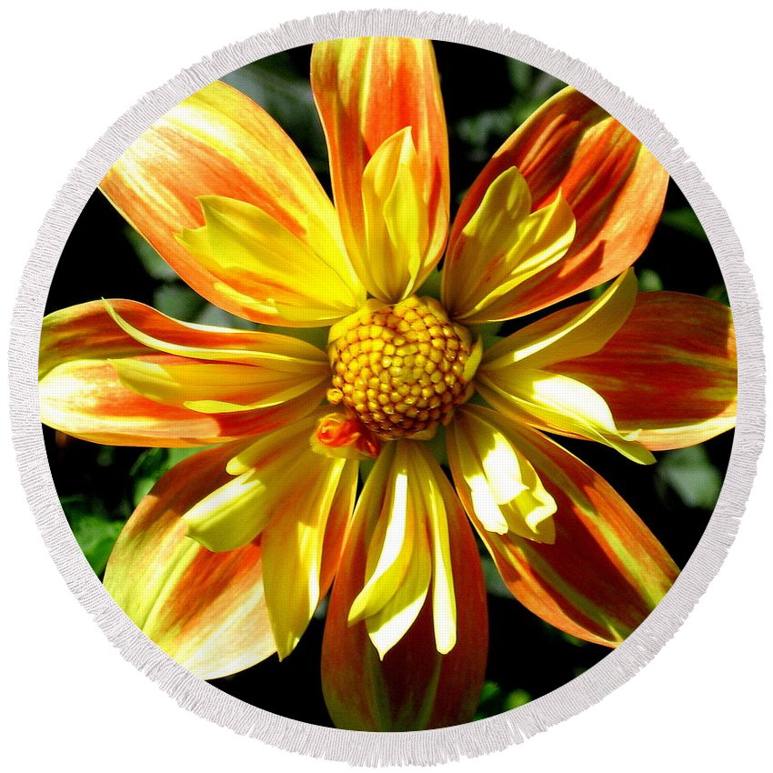 Yellow Round Beach Towel featuring the photograph Dazzling Dahlia Photograph by Kimberly Walker