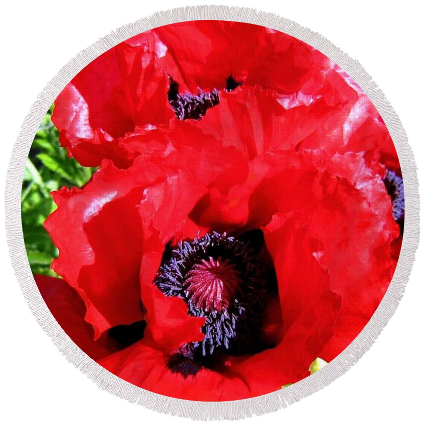 Poppies Round Beach Towel featuring the photograph Dazzling Red Poppies by Will Borden