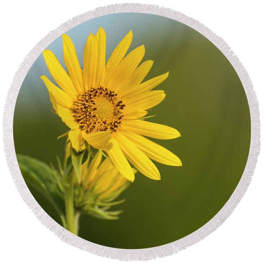 Kansas Round Beach Towel featuring the photograph Ddp Djd Sunflower 2639 by David Drew