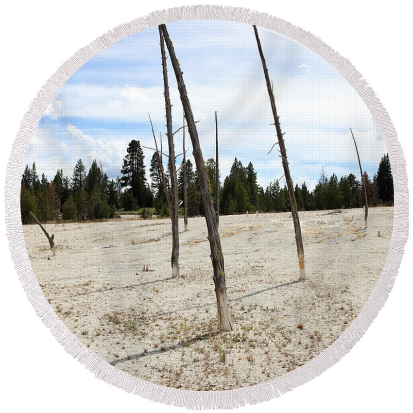 Hot Spring Round Beach Towel featuring the photograph Dead Trees, Yellowstone by Ted Kinsman