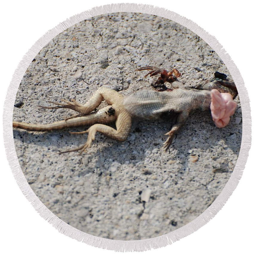 Lizards Round Beach Towel featuring the photograph Death By Gum by Rob Hans
