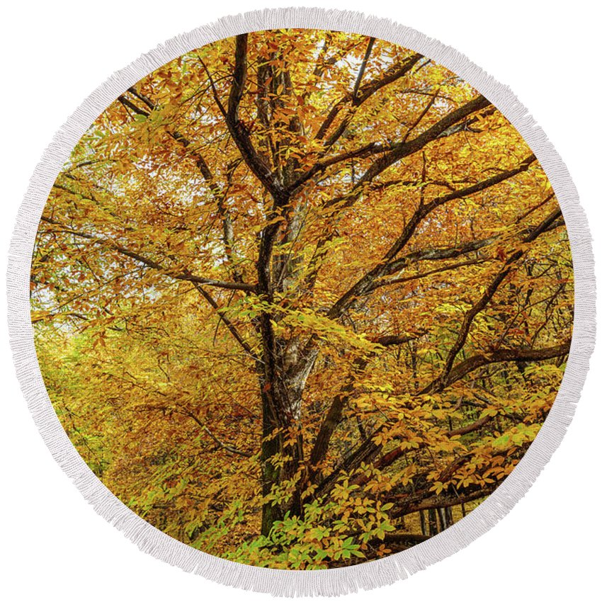 Chestnut Round Beach Towel featuring the photograph Deciduous Forest In The Autumn by Catalin Petolea