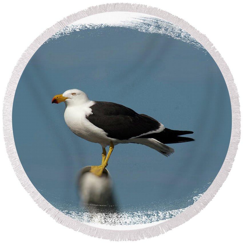 Albatross Round Beach Towel featuring the photograph Deckhand by Douglas Barnard