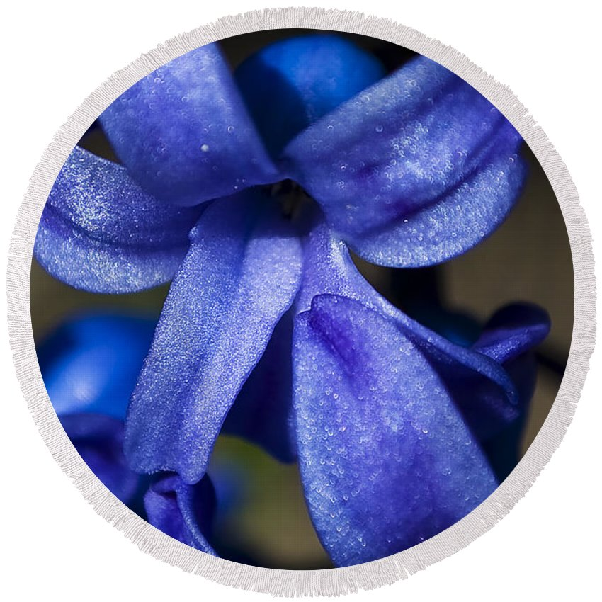 Blue Round Beach Towel featuring the photograph Deep Blue Flower by Svetlana Sewell