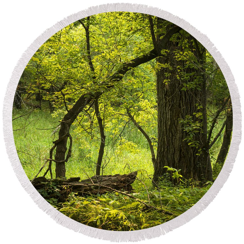 Forest Round Beach Towel featuring the photograph Deep Forest Scenic by Donald Erickson