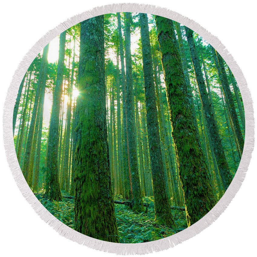 Forest Round Beach Towel featuring the photograph Deep In The Forest by Jeff Swan