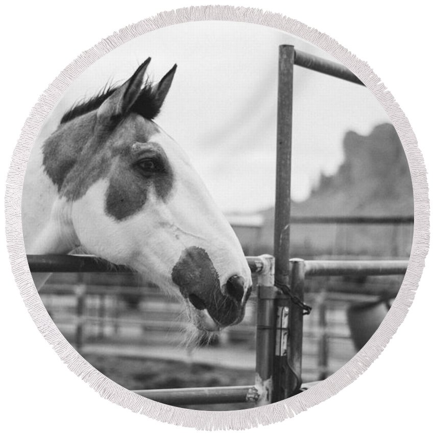 Horse Round Beach Towel featuring the photograph Deep In Thought by Anna Friedrichs